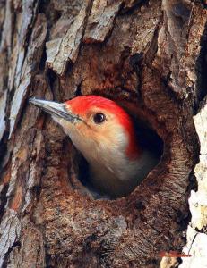 oiseau_paraboles